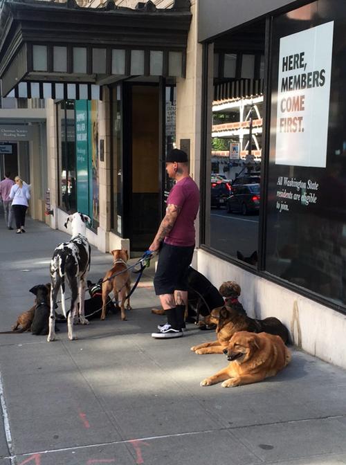 dog guy.png