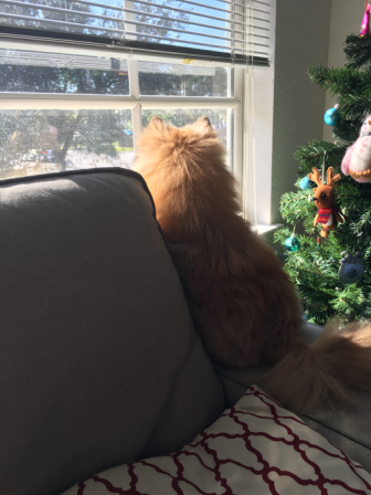 he found this spot on the couch where he loves looking out the window!